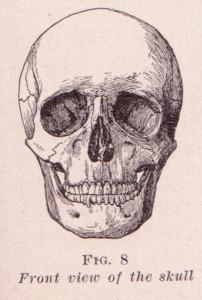 A diagram of a human skull