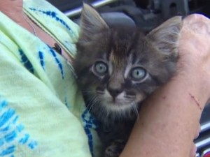 This very small kitten survived flooding by hiding under the hood of a woman's car. (KHOU 11 News)