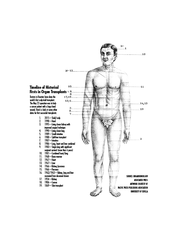 infographicbody
