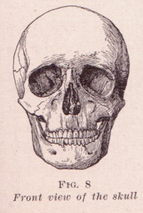 A diagram of a human skull